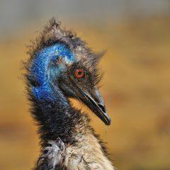 Emú (IV) – FOTO DESTACADA