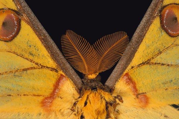 El olfato de las mariposas _ Albert Masó