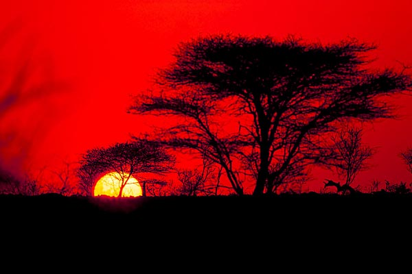 Kalahari acacias puesta de Sol lbert Masó