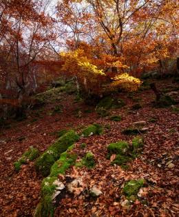 Paseo por Ciñera II – FOTO DESTACADA
