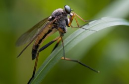 Insecto sobre fondo verde